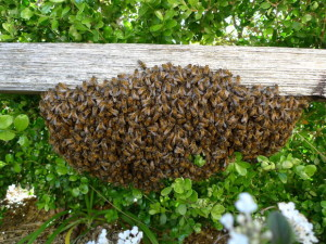 bee-swarm-beam