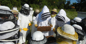 onsite beekeeping 101 class