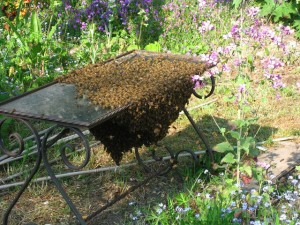 bee-removal-bee-swarm-table