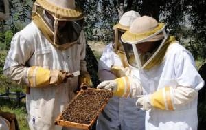 beekeeping 101 class apiary