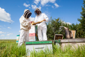 beekeeper mentor