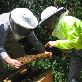 beekeeping-mentor