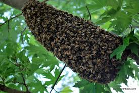 bee-swarm-log