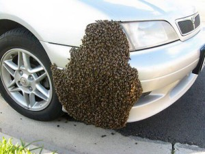 bee-swarm-car