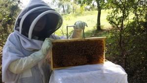 hive-maintenance