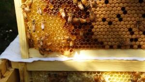 bee-hive-frame