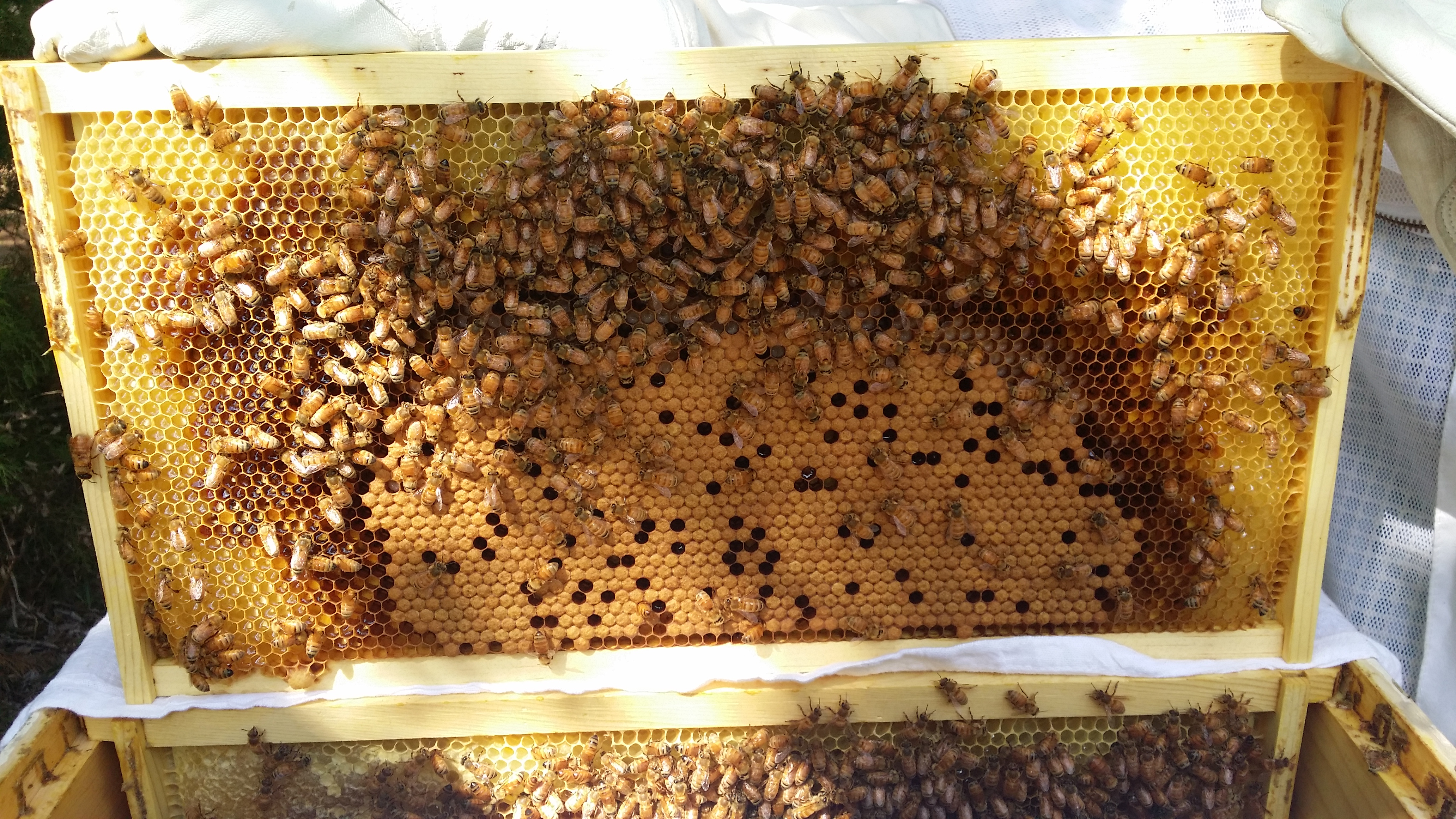top 10 things about beekeeping to consider award winning local