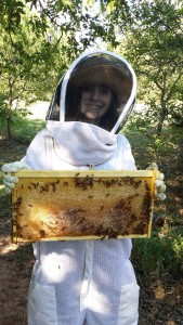 teach yourself beekeeping