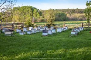 beehives-bee-yard